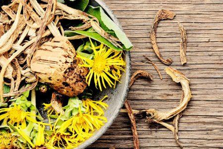 Veliki oman – tisočletja staro zelišče za krepitev pljuč